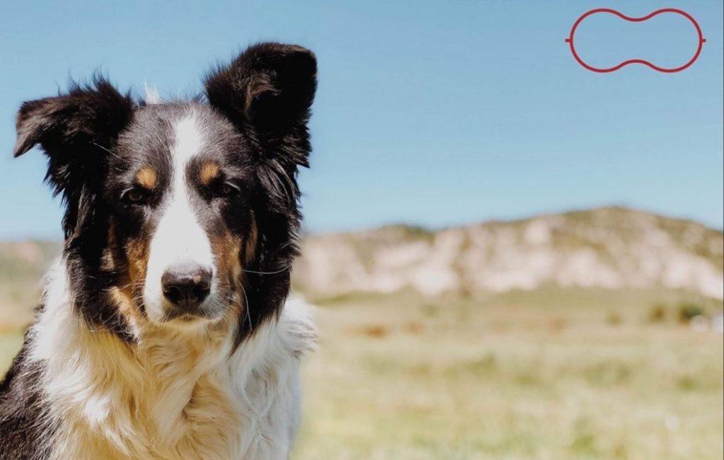 Nebraska dog wins runner-up in Farm Bureau contest