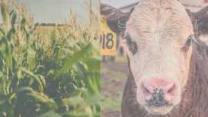 New Crop, Cow-Calf Budgets Available for 202