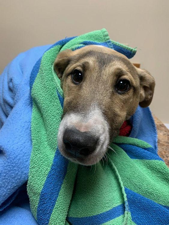 Citizen reports lead to puppy rescue, arrest for Animal Cruelty