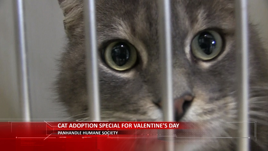 "Panhandle Humane Society at ""Cat""pacity; Offering $14 Off Cat Adoptions"