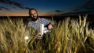 NEW RESEARCH LINKS GENE FOUND IN WILD WHEAT TO DROUGHT TOLERANCE IN CULTIVATED WHEAT