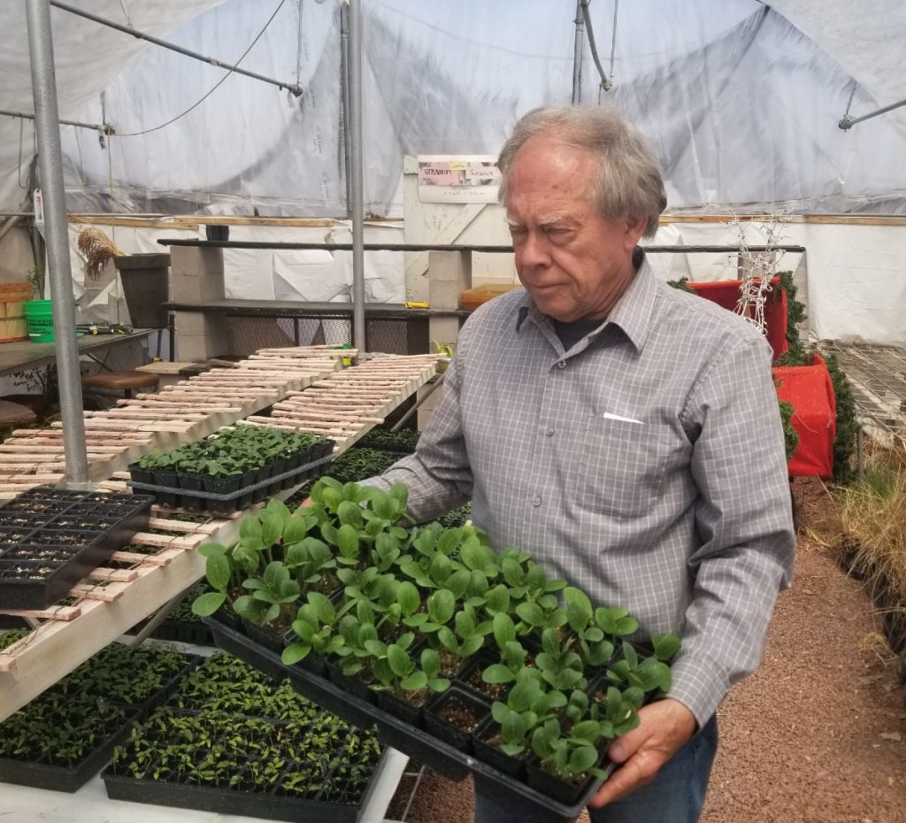 Nebraska Department of Ag sets guidelines for nurseries and greenhouses