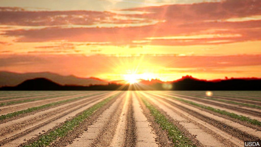 Planting Progress, WASDE & Market Feels | Trading Bits & Bytes