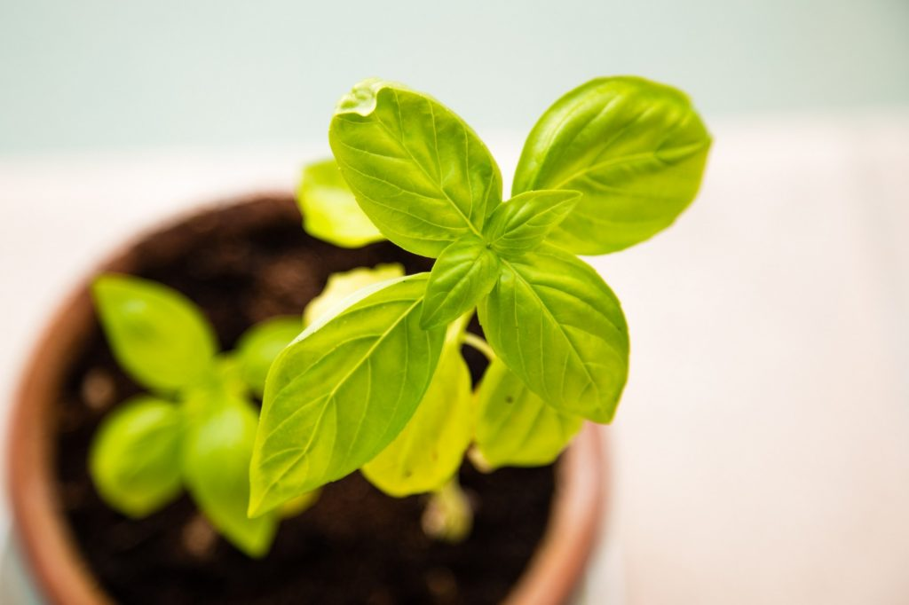 """North Platte NRD Announces """"2nd Annual Plant Sale For Sustainability"""""""