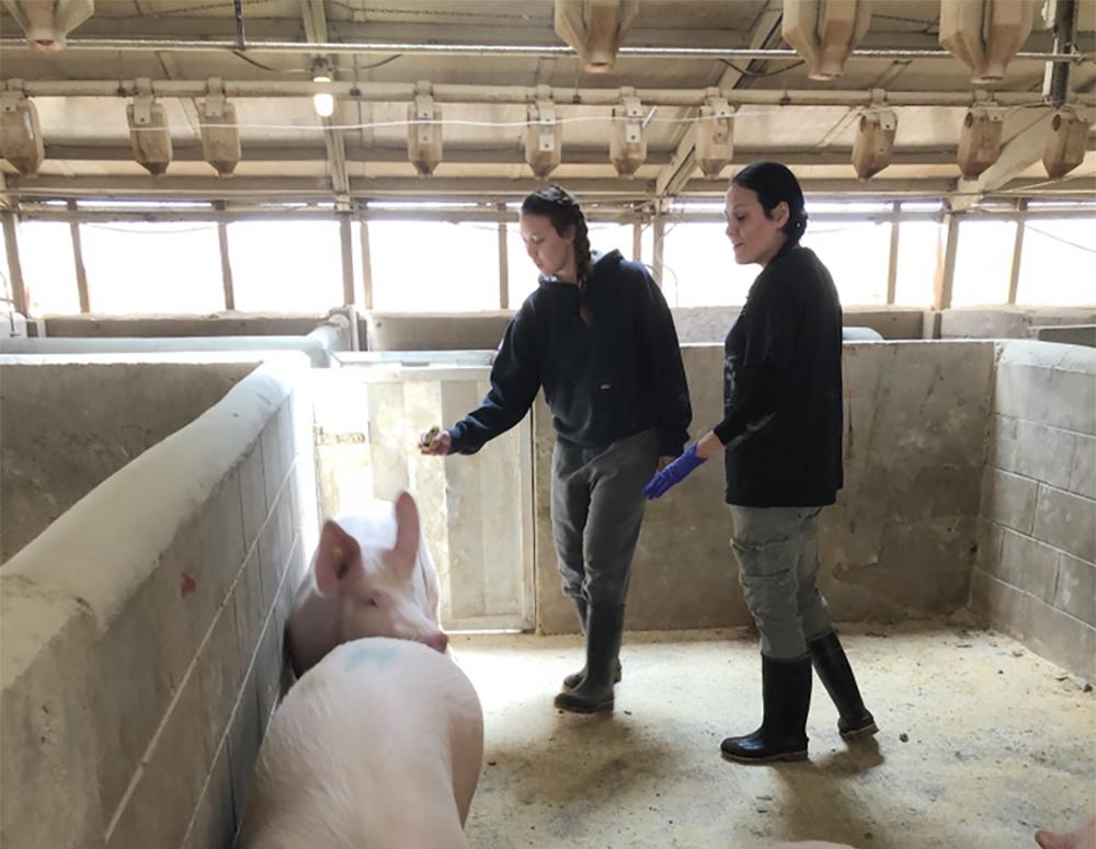 Meatpacking crisis hits area hog farm
