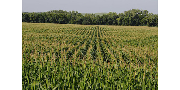 Land grant universities key to detecting plant disease