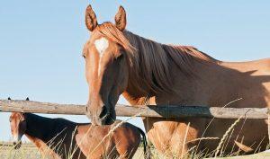 NDA confirms vesicular stomatitis case in horse