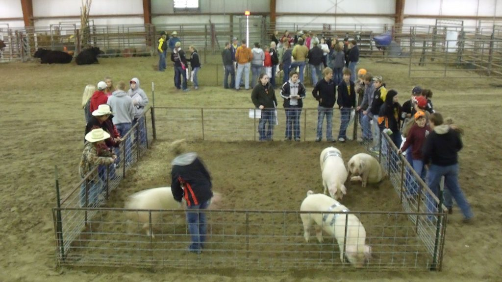 Virtual livestock judging camp will be June 16-18