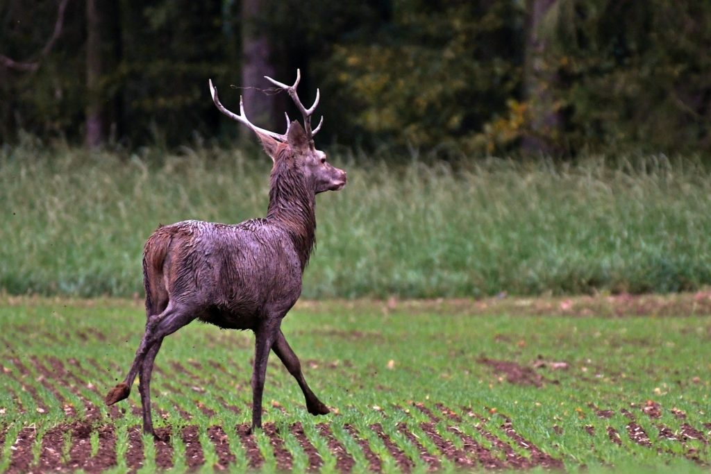 Game and Parks has resources for landowners with wildlife damage