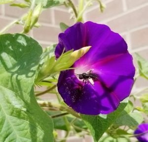 USDA offers ag producers opportunities to grow homes for pollinators