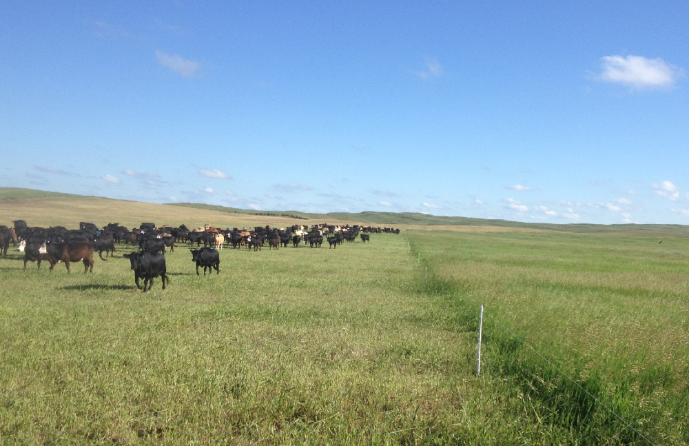 (AUDIO) Grazing workshop scheduled to boost grazing production