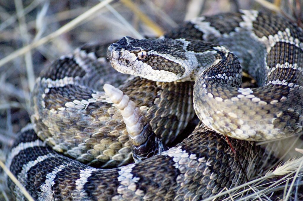 Snakes of Nebraska 'Zooming' to the Public