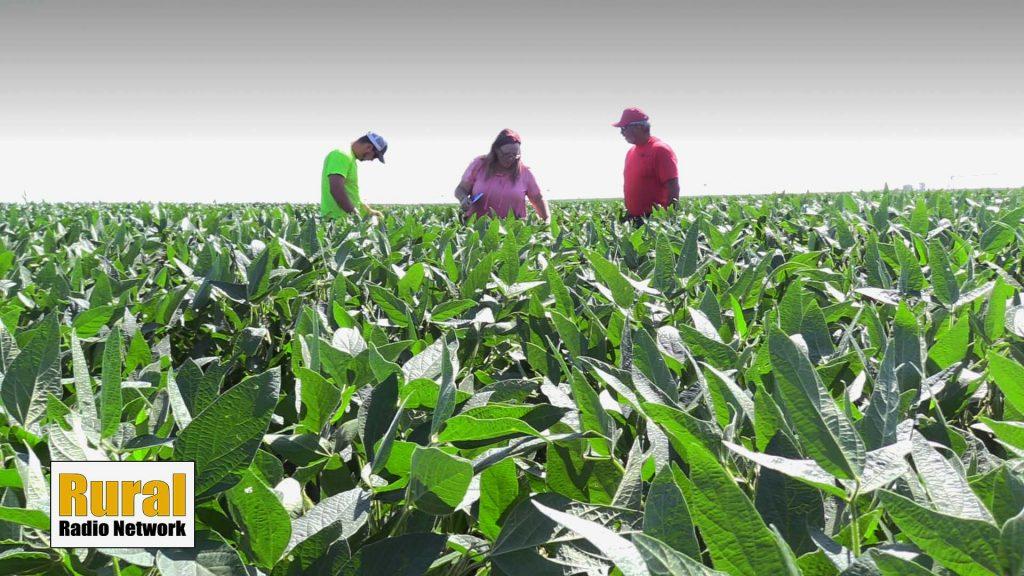 Crop condition update near Surprise, Nebr. | Fridays in the Field | Ep. 12