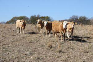 Extension webinar on drought management for ranchers