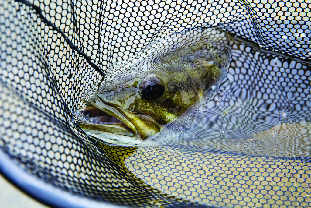 Whether Releasing or Keeping, Handle Fish With Care