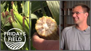 Harvest on the horizon near Henderson, NE | Fridays in the Field | Ep. 11