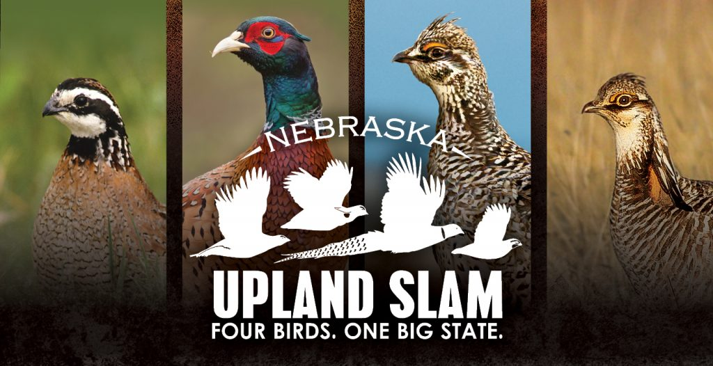 Hunters go for Upland Slam starting Sept. 1
