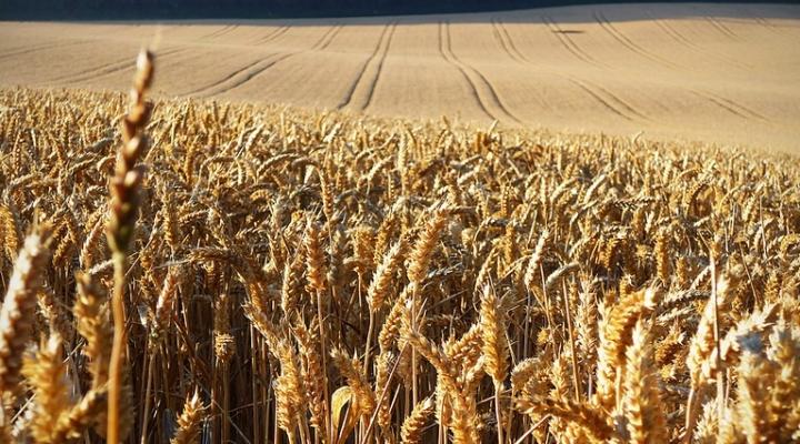 Soil Health Partnership to spotlight wheat