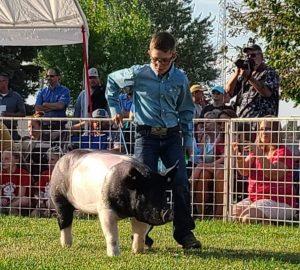 Audio: Goshen County Fair - horses and swine