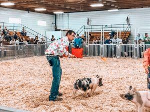 Audio: Box Butte County Fair: Swine Show