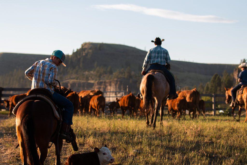 Cattle Call with Brad Kooima Talks Long Term Trade
