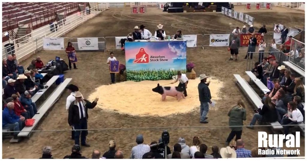 Aksarben Purple Ribbon Auction rewards hard-working youth | Aksarben Stock Show Spotlight