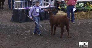 WATCH LIVE:  Open Class Beef Show | 2020 Nebraska State Fair