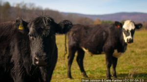 Cattle Call looks at potential for higher cash for cattle