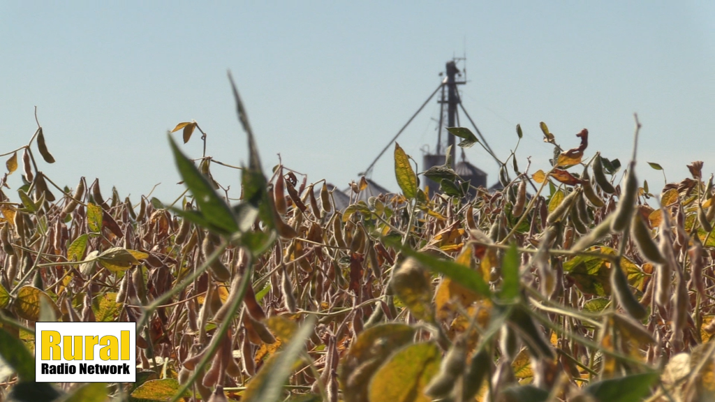 Dry conditions persist in northeast Nebraska | Fridays in the Field | Ep. 15