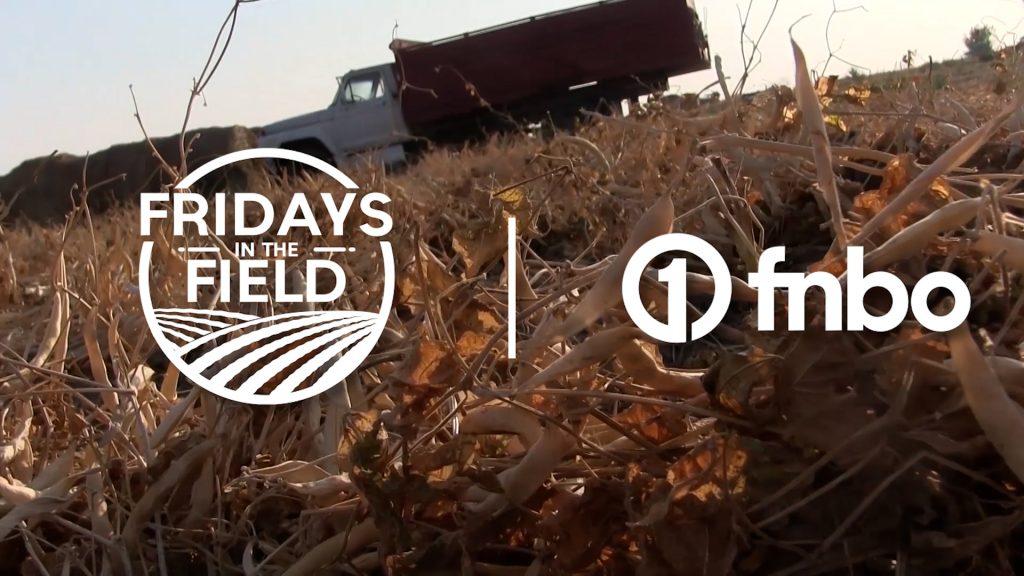 Dry bean harvest begins in Nebraska Panhandle | Fridays in the Field | Ep. 18