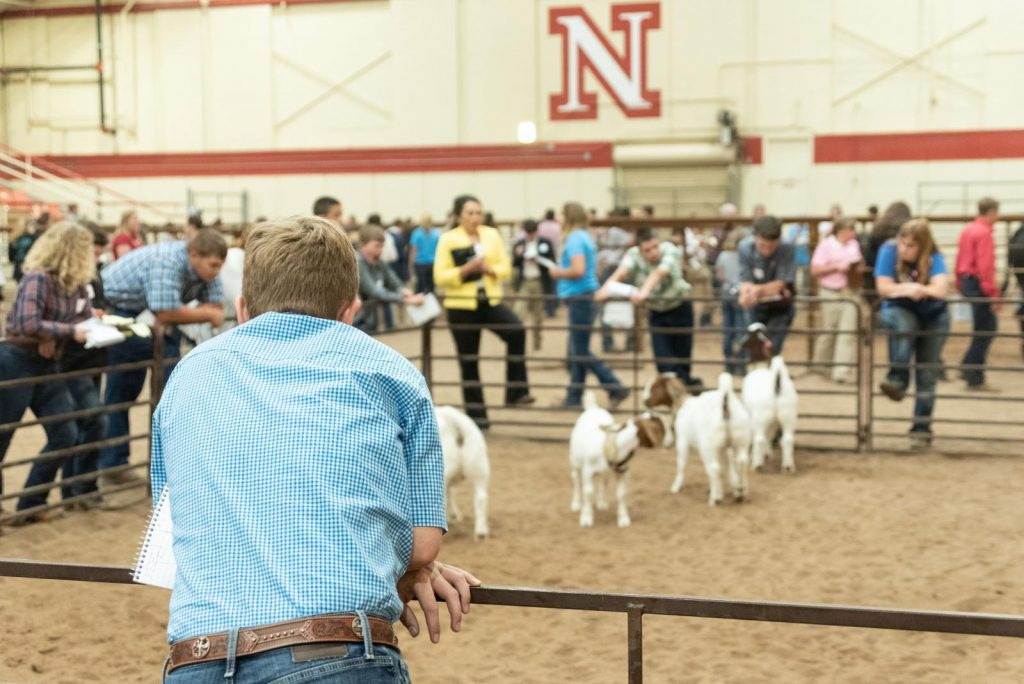 (AUDIO) UNL livestock judging team prepares for competition
