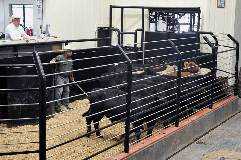 Ways to capture the marketing value on calves
