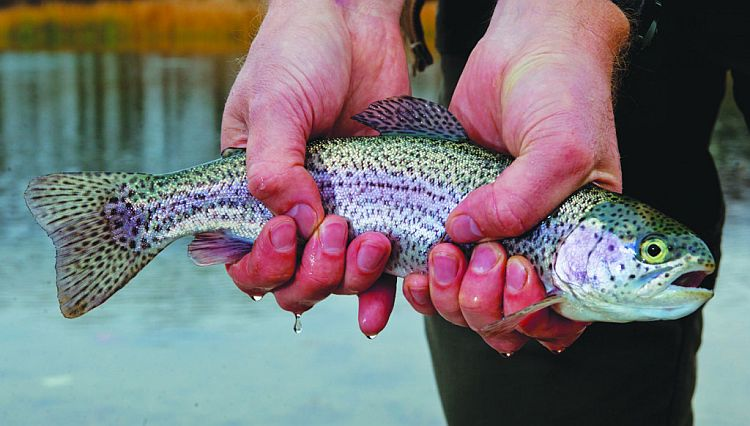In October, trout will be everywhere in Nebraska