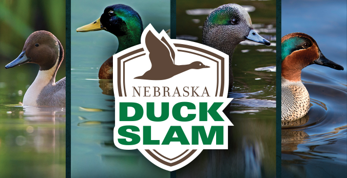Ogallala Hunter First to Complete 2020 Nebraska Duck Slam