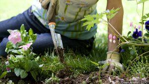 Pandemic Boosts Popularity of Gardening, 'Backyard Farmer'