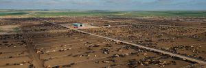 Green Plains sells remaining 50% of Green Plains Cattle Company
