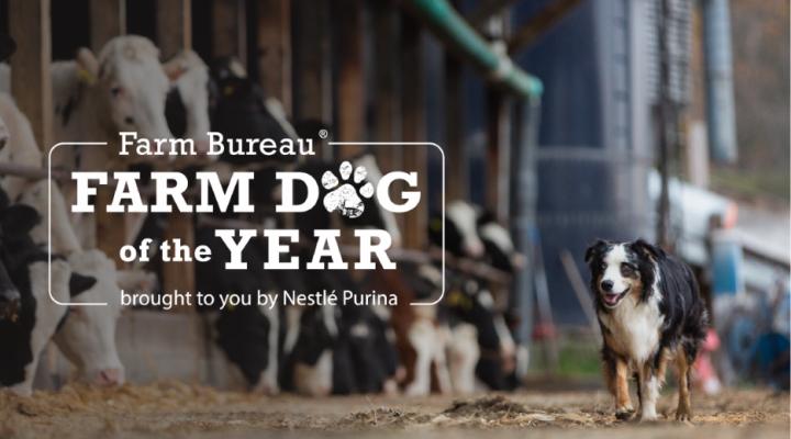 Farm Bureau names 2021 Farm Dog of the Year