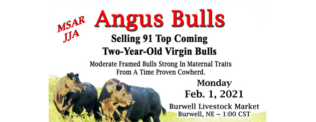 Mike Sitz Angus Ranch Sale