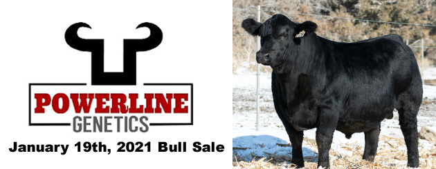 Powerline Genetics Bull Sale