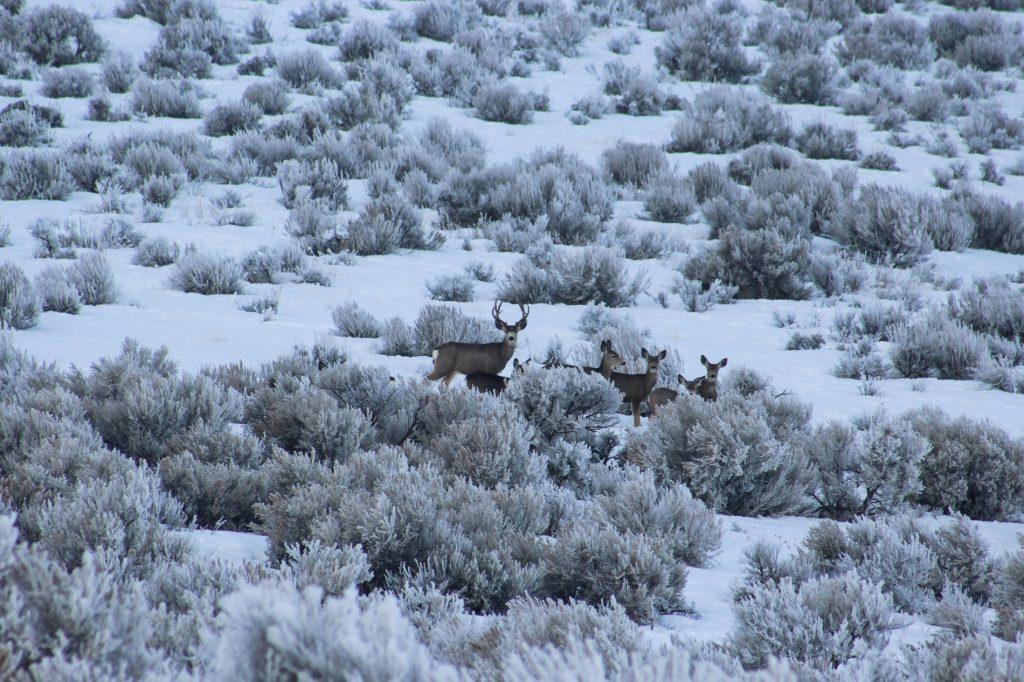Commission to Consider Special Landowner Deer Season at Jan. 13 Meeting
