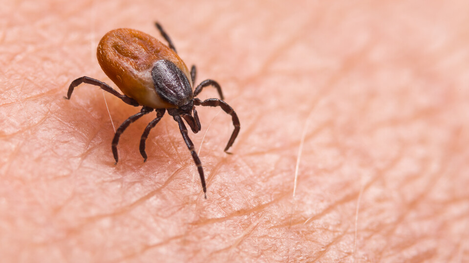 Researchers Map Ticks Across Cornerstone State