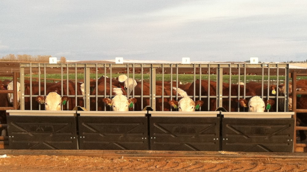 Friday Feeders: Olsen Ranch participates in national sire program to better the breed