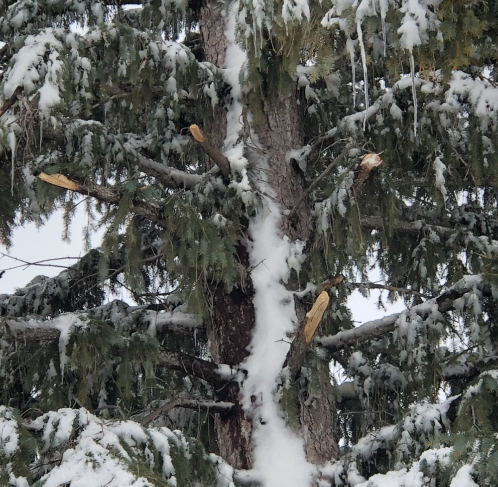 Winter Storm Damages Trees in Panhandle